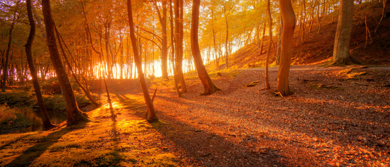Autumn scenery. Beautiful gold fall in forest.